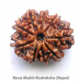 Nava Mukhi Rudraksha (with silver capping)