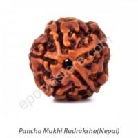 Pancha Mukhi Rudraksha (with silver capping)