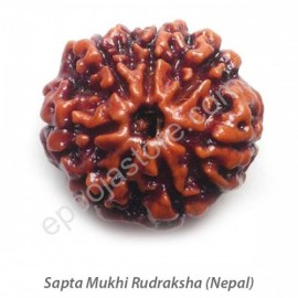 Sapta Mukhi Rudraksha (with silver capping)