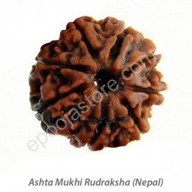 Ashta Mukhi Rudraksha ( With Silver Capping )