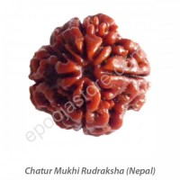 Chatur Mukhi Rudraksha ( With Silver Capping )
