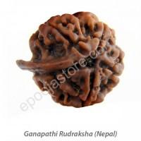 Ganesha  Rudraksha ( With Silver Capping )