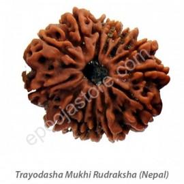 Trayodasha Mukhi Rudraksha (with silver capping)